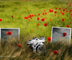 nature and photography image