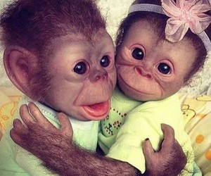 animal, monkey, and love image