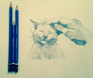 animal, cat, and hand image