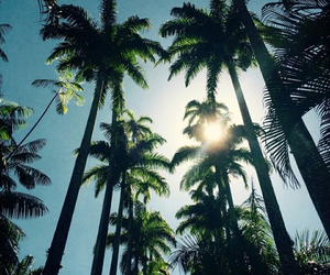 green, palms, and sunset image