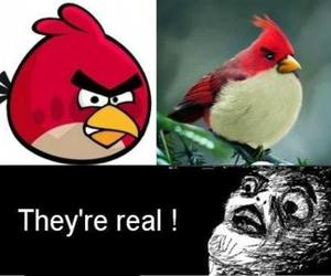 angry birds, funny, and bird image