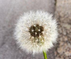 ball, plant, and beautiful image