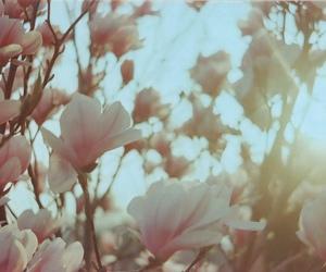 flowers, analog, and beautiful image