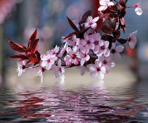 flowers, water, and tree image