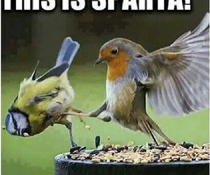 birds, sparta, and funny image