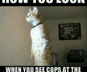 cat, funny, and cops image