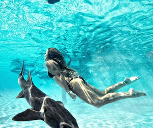 ocean, summer, and shark image