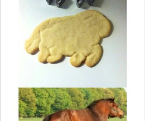 animal, big, and horse image