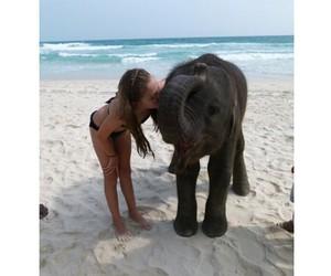 beach, elephant, and girl image