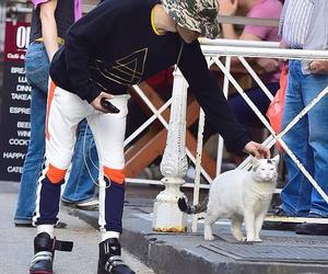 jared leto, cat, and 30stm image