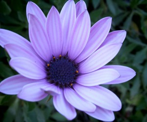 beautiful, flowers, and purple image
