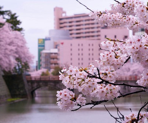 pink, flowers, and japan image