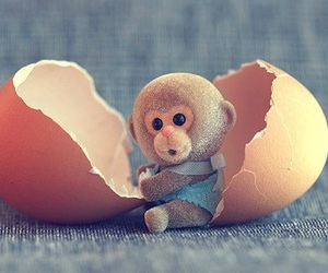 cute, monkey, and egg image