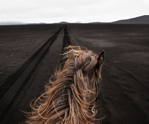 horse and adventure image