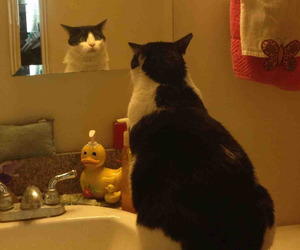 cat, mirror, and funny image