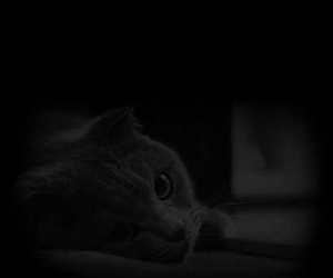 black, cat, and gray image