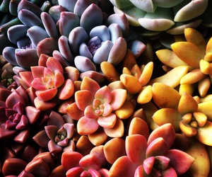 colorful and plant image