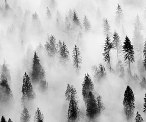 autumn, black and white, and clouds image
