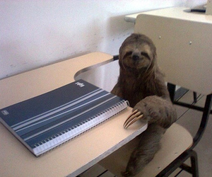 sloth, school, and funny image