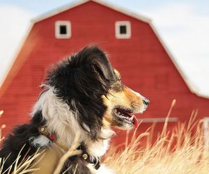 barn, dogs, and pets image