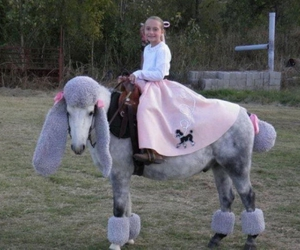 girl, horse, and poodle image