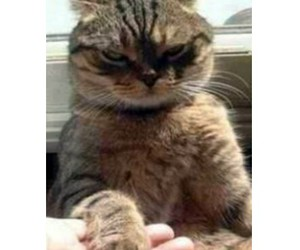 cat, funny, and kiss image