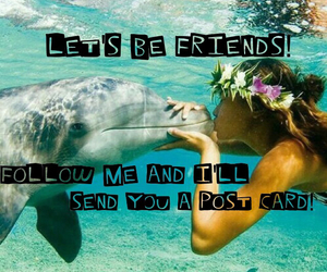friendship and dolphin love image