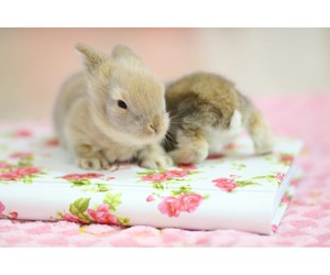 baby, bunny, and floral image
