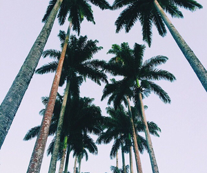 summer and palm trees image