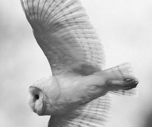 owl, white, and animal image