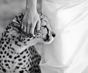 animals, leopard, and baby image