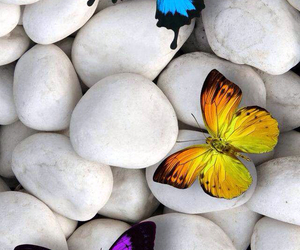 butterfly, wallpaper, and beautiful image