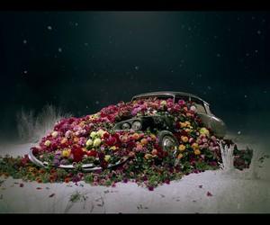 car, flower, and katy perri image