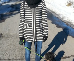 dog, stripes, and finland image