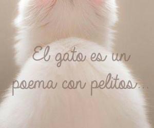 gatito, Gatos, and pet image