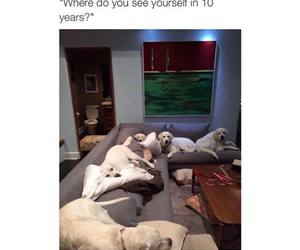 dogs, funny, and lol image