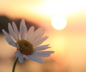 flowers, nature, and sun image