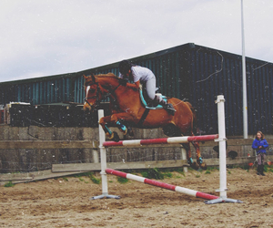horseriding, horses, and jumping image