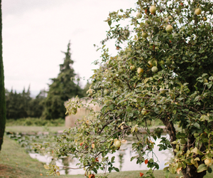 apples, country, and garden image