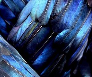 blue, feather, and bird image