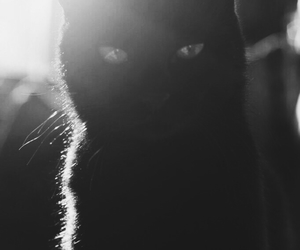 bat, batman, and black image