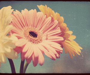 floral, flowers, and pink flowers image