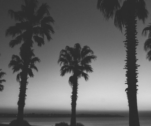 sunset, palms, and summer image