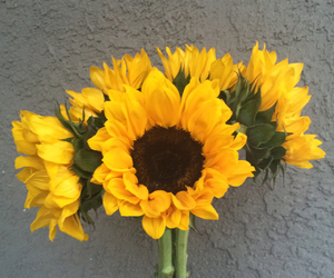 flowers, sunflowers, and tumblr image