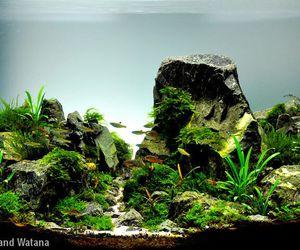 aquascaping and aquarium image