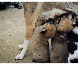 dog, puppy, and film image