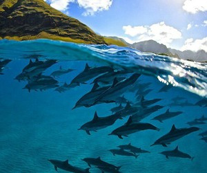 summer, ocean, and dolphin image