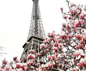 paris, flowers, and city image