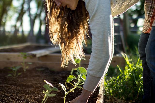 garden, gardening, and plant image
