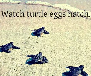 eggs, hatch, and turtle image